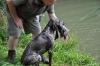 Freya beim Bringen der Ente