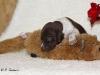 22.50 Uhr - Dexter kämpft mit dem Otter