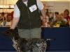 In der FCI-Gruppe 7 (Kontinentale Vorstehhunde) kann Annabelle den 2.Platz belegen.