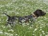 Annabelle in der Kamillenwiese
