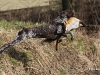Und nochmal mit Fuchs