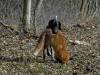 Debora trägt den Fuchs schon gut!