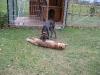 Ditza hat auch kein  Problem mit dem Fuchs