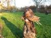 Eine Schnepfe - ganz selten bei uns!