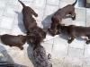 Fütterung der Löwen im Freien
