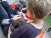 die Besucherkinder spielen gerne mit den Welpen