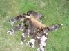 Dina untersucht den Fuchs auch genau
