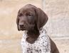Dunja wird Falknerhund in Nürnberg