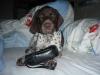 Daika darf mit Frauchen im Bett kuscheln.........
