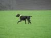 Und Esko lernt sehr schnell und steht in guter Manier vor