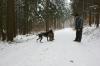 Zutragen des Fuchses - brav is´ ´se