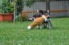Holly und Henry