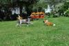 Henry steht am Fuchs vor
