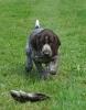 Hunter ist noch frei und sucht ein Jägerzuhause