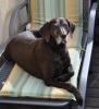 Und Aufpasserin Bella genießt die Sonne