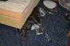 Dax im Hotelzimmer - völlig relaxed ?