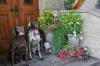 Bella und Dax vor der Haustür