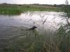 Wasserübungstag 2008