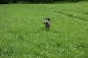 Elisa auf der Kaninchenschleppe