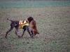 Ein Fuchs wurde erlegt -