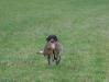Annabelle kommt mit Hasen zurück