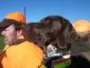 Dax auf dem Jagdwagen - ihm gefällt es sehr gut