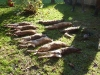 Die Tagesstrecke  drei Füchse und sieben Hasen