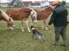 Dax macht Bekanntschaft mit Pferden!