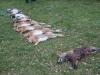 Eine bunte Strecke mit nassem Fuchs