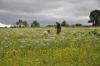 Ü-Tag-Kersbach: Freya beim Ansetzen vor der Feldsuche