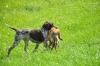 Ü-Tag-Prebitz: Fuchs über Graben - für Fiona kein Problem