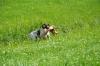 Ü-Tag-Prebitz: Findus kann endlich wieder mittrainieren - gleich Fuchs über Graben