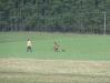 Danielle beim Vorstehen im Feld