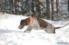 Fiona darf im verschneiten Finnland umher toben