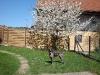 Kirschblüte mit Annabelle - Frühjahr 2009
