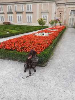 Hanna vor dem Blumenmeer