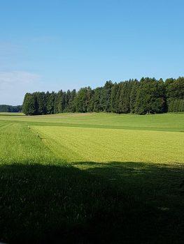 Blick auf den Riedelwald