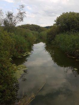 Wasserarbeit am Wallersee