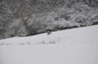 Dax findet den Fuchs....