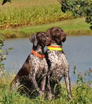 Dax und Freya am Wasser