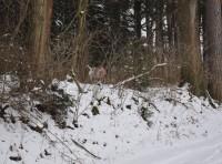 Findus`erster Fuchs aus der Deckung
