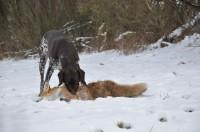 Dax und Fuchs...
