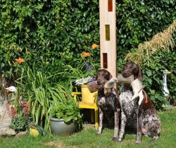 Dax und Annabelle im Garten