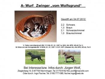 Ditza´s Wurf