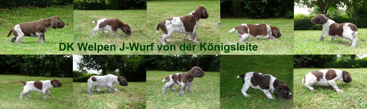 J-Wurf v. d. Königsleite