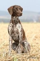 Hanna - 10 Monate alt