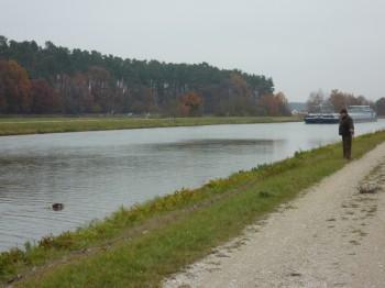 Dax beim Entenapport am Kanal