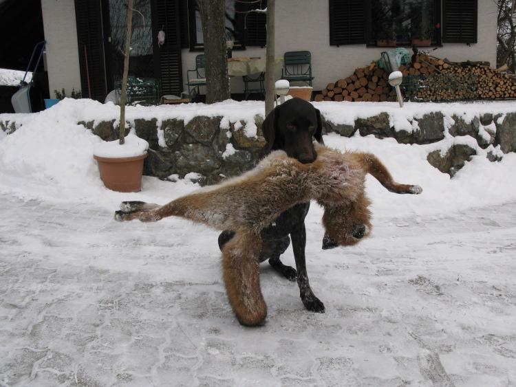 Carmen (Zara) beim Fuchsapport