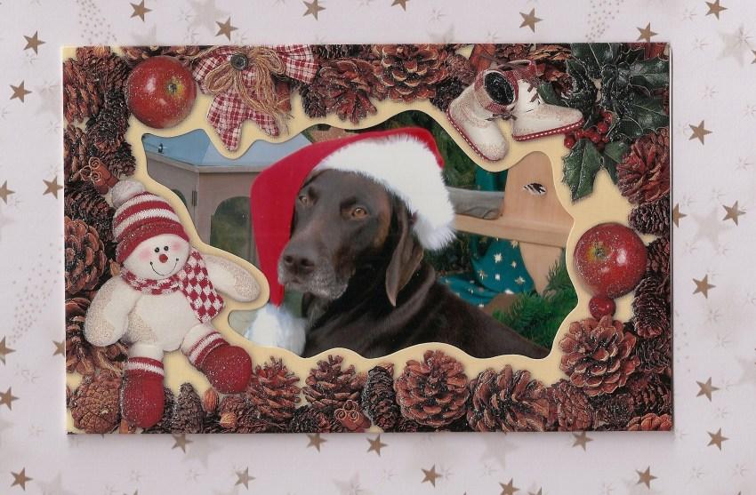 Frohe Weihnachten m. Bella KS von der Königsleite