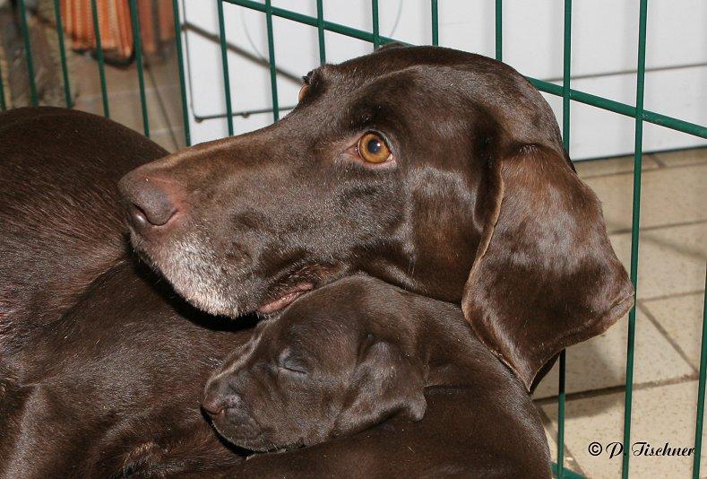 Hundemutter und Welpe